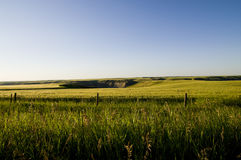 Пшеничное поле Стоковая Фотография RF