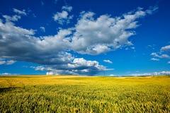 Пшеничное поле Стоковые Фотографии RF