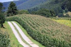 Пшеничные поля в горах Германии, Hettigenbeuern Стоковое Изображение RF