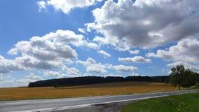Пшеничные поля Стоковая Фотография