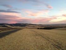 Пшеничные поля Walla Walla Стоковое Фото