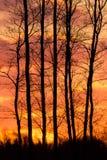 пылая заход солнца стоковое фото