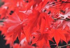 Пылая листво стоковая фотография rf
