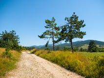 Пылевоздушная проселочная дорога в ландшафте зеленого Karst, Словения Стоковое Фото