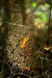 пылевоздушная сеть паука стоковые изображения rf