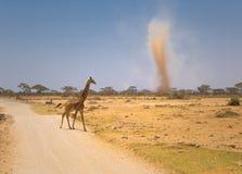 пыльная буря Кении giraffe amboseli Стоковая Фотография