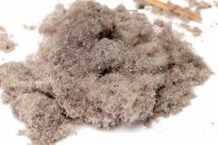 пыль Стоковая Фотография