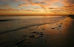 Пышная красота захода солнца от красно-апельсина цветет Стоковые Изображения RF