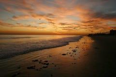 Пышная красота захода солнца от красно-апельсина цветет Стоковые Фото