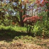 Пышное зеленое свойство в Anne Arundel County в Мэриленде стоковая фотография