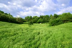 пышное поля зеленое Стоковые Фотографии RF