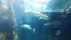 Пышные рыбы Стоковое Изображение RF
