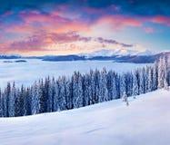Пышный восход солнца зимы в прикарпатских горах с cov снега Стоковые Изображения RF