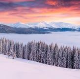 Пышный восход солнца зимы в прикарпатских горах с cov снега стоковое фото