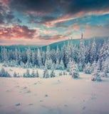 Пышный заход солнца зимы в прикарпатских горах с бухтой снега Стоковые Фотографии RF