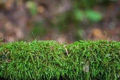 Пышный зеленый мох стоковые фото