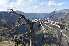 Пышный каньон Тары, самый глубокий европейский каньон, бдительность Tmorska Glavica, стоковое фото