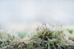 Пышный мох на пастельной предпосылке стоковая фотография