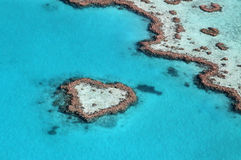 Пышный риф сердца стоковое изображение