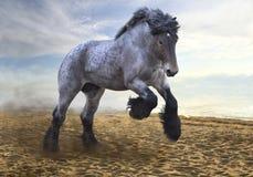 Пышный сильный и мощный жеребец породы Brabanson стоковая фотография rf