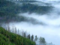 Пышный тяжелый туман в ландшафте Туман осени сметанообразный в сельской местности Холм увеличенный от тумана, Стоковые Изображения RF
