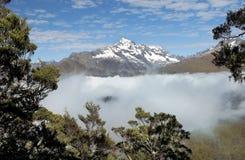 Пышный фантастичный пейзаж в Новой Зеландии Стоковые Фото
