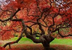 пылая красный цвет Стоковые Изображения
