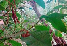 Пылевоздушные листья Стоковые Фотографии RF