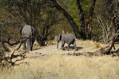 Пыль африканских слонов купая на равнинах Стоковое фото RF