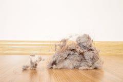 Пыль Стоковые Фото