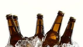 Пьяное пиво в темных бутылках стоит в льде Белая предпосылка конец вверх сток-видео