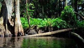 Пятно черепахи Стоковая Фотография RF