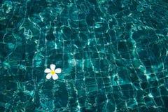 Плавательный бассеин с солнечный отражениями стоковое изображение