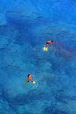 Плавать в водах бирюзы стоковые изображения