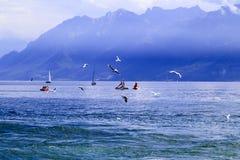 Плавать в озере Стоковое Изображение