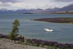 Плавать в озере Tekapo с цветением на береге, Новой Зеландией lupines Стоковая Фотография