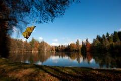 Плавать лист Стоковое Фото
