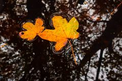 плавая листья стоковое изображение rf