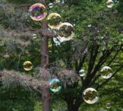 Плавая пузыри Стоковое Фото