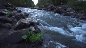 Плавая река в восходе солнца Идилличный звук сцены и воды 50 fps сток-видео