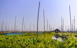 Плавая сады, озеро Inle, Мьянма (Бирма) Стоковые Фото