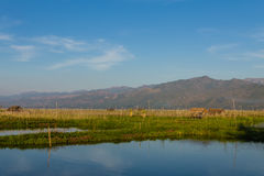 Плавая ферма, озеро inle в Мьянме (Burmar) Стоковые Изображения