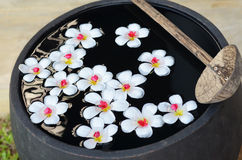 Плавая цветки templetree на воде Стоковое Изображение RF