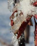 Плавя свирли льда стоковая фотография rf