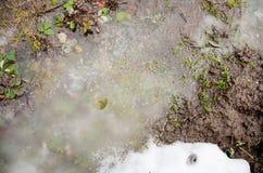 Плавя снег на зеленой траве Первый цветок крокуса весны в воде от плавя снега Плавить снежка Течение воды с шишками идет снег я Стоковые Фото