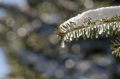 плавя снежок Стоковые Фото