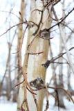 плавя снежок Стоковое фото RF