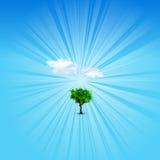 Плакат блеска лета Стоковые Фотографии RF