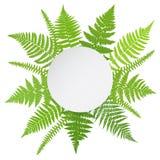 Плакат джунглей Предпосылка frond папоротника Стоковые Фотографии RF