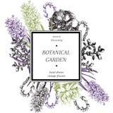 Плакат цветений вектора нарисованный рукой Выгравированное ботаническое искусство сбор винограда милой иллюстрации птиц установле Стоковое Фото